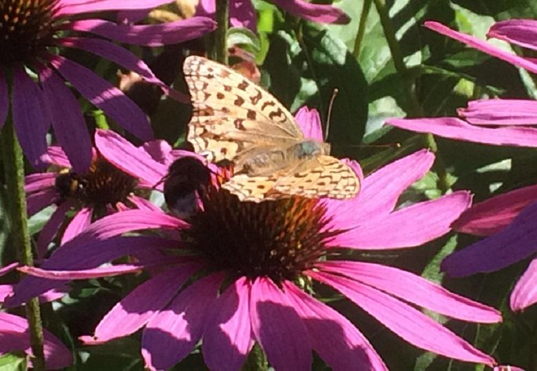 Perhos- & pörriäiskasvit